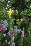 Garden of wonder